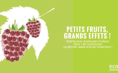 Distribution d'arbustes à petits fruits
