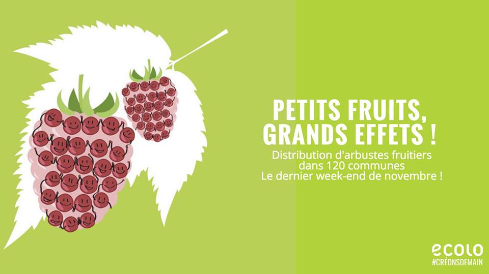 Distribution d'arbustes à petits fruits