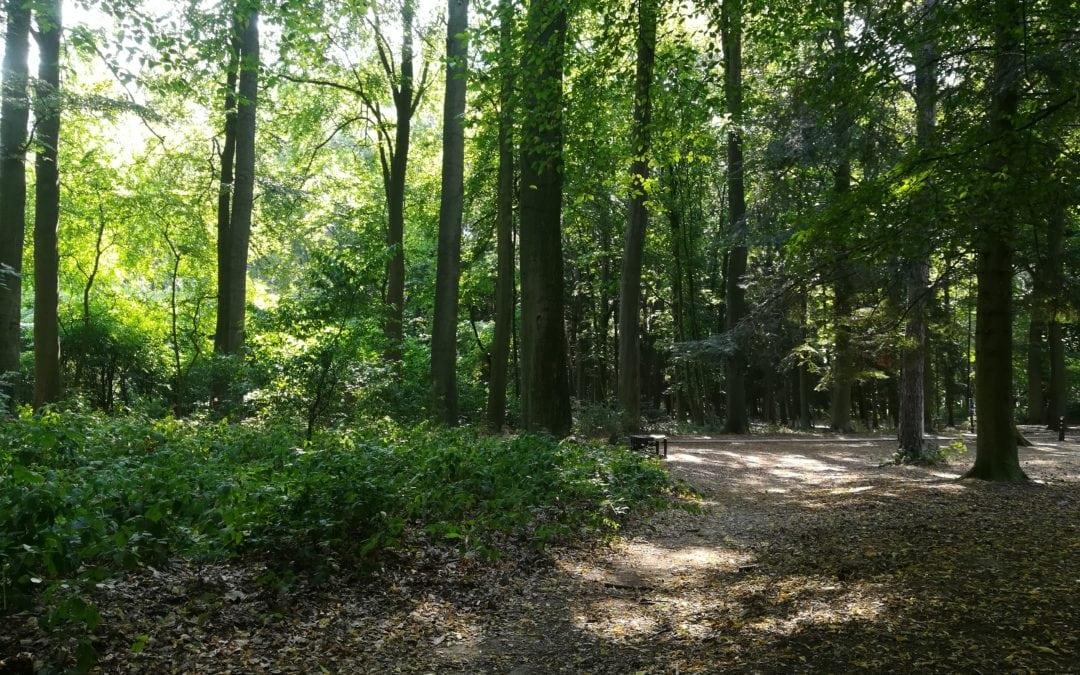 Multiplier les espaces verts multifonctionnels et intergénérationnels